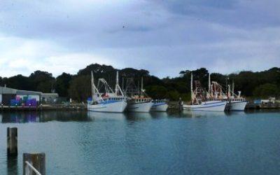 iluka_boat_harbour_dredging_-_boat_harbour_03_-_small.jpg